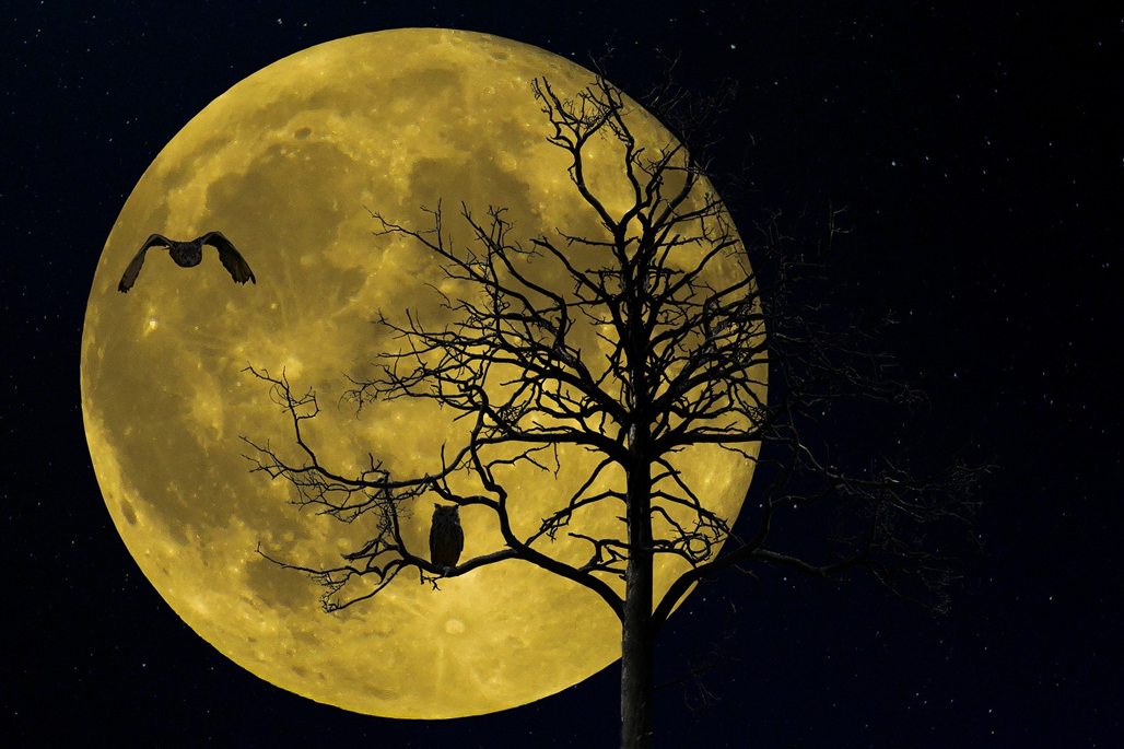 article thumb - Owls against a full moon